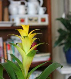 cozy little house bromeliad