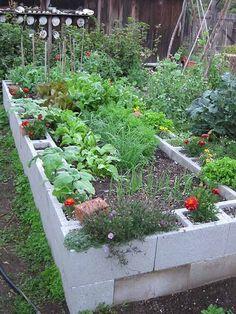 raised garden bed with concrete blocks