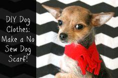 DIY Dog Clothes: Make a No Sew Dog Scarf!
