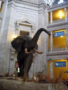 American Museum of Natural History (New York, NY)