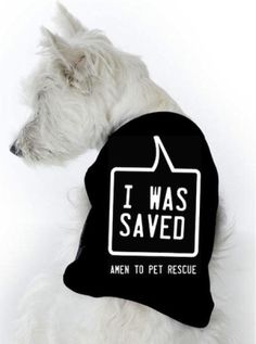 But the dogs really saved me.  <3