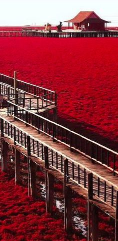 Red Beach in Panjin, China • travel
