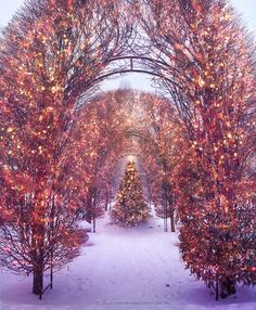 holiday, christmas time, arch, season, christma tree, christmas lights, winter wonderland, place, christmas trees