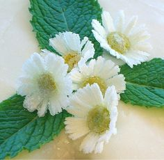 How to Crystallize  Flowers | baking911.com