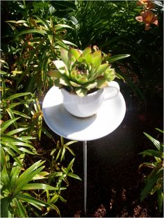 This is a tea cup glue togeter and planted with Hens n Chicks
