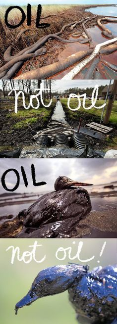 """Arkansas: Tar-sands oil isn't oil-oil...so Exxon doesn't have to pay. Since it's not oil-oil, ExxonMobil hasn't paid into the government clean-up fund that would help bankroll the epic scrub-down necessary to rid poor unsuspecting Mayflower, Ark., of all that sludge. """"A 1980 law ensures that diluted bitumen is not classified as oil, and companies transporting it in pipelines do not have to pay into the federal Oil Spill Liability Trust Fund,"""" says Climate Progress."""