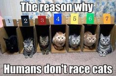 cats, funni stuff, anim, race cat, laugh, true, cat race, kitti, cat ladi