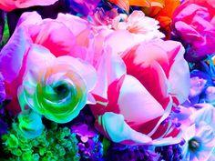 Torkil Gudnason, Electric Blossom 571  (2012)