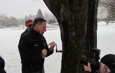 Shumlin_maple_tree_tapping_Feb_2013_IMG_6079-w550.jpg