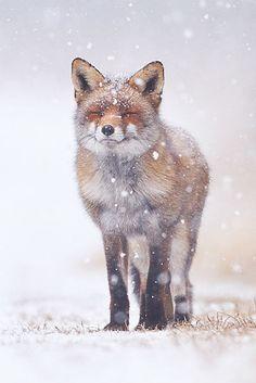 Winter wonderland { Pim Leijen}