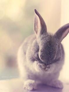 Shy bunny ... by *aoao2 on deviantART
