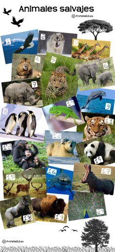 Animales salvajes (B1) ~ Actividad online para practicar el vocabulario de los animales en español con imágenes para relacionar | @ProfeDeELE.es.es.es.es