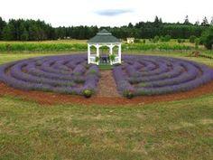 Labyrinth in Lavendar...
