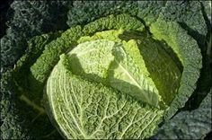 Wirsing recipe (use savoy cabbage, NOT kale!)