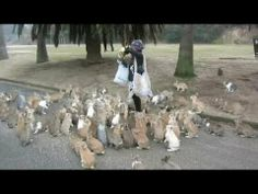 """""""Stampeding"""" herd of rabbits! Watch the video to see all the action."""
