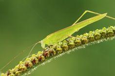Diatomaceous Earth: A Natural Pesticide Alternative