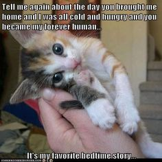 funny animals, bedtime stories, animal rescue, pet, baby kittens, fur, dog, baby cats, true stories