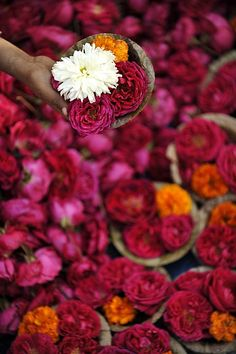 Flower Market in india #JADEbyMK #india #flowers #colours