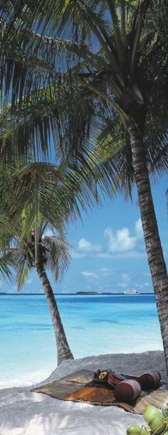 palm, season, heaven, dream, luxury travel