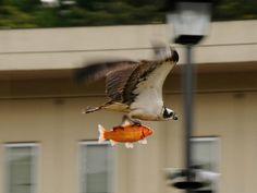 FISHEXPRESS EAGLE