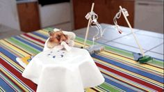 Hamster Eating Burritos - Youtube Video of the Week