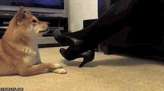 dog crossing legs... so cute!