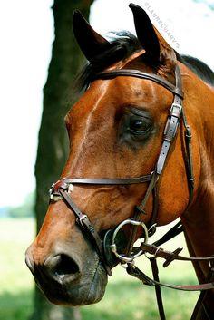 Jumper, Horse Show