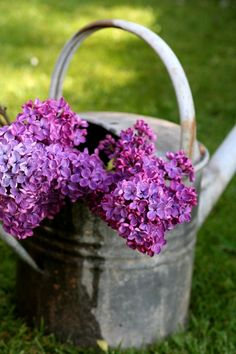 Lilacs and watering can