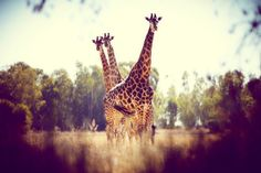 my favorite animal in the wild - via free people