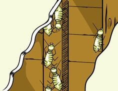 What to Do If You Have Termites >> http://www.diynetwork.com/home-improvement/how-to-fix-problems-caused-by-pets-critters-and-pests/pictures/index.html?soc=pinterest#