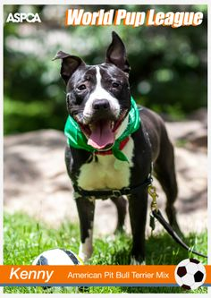 While the rest of the world is watching the World Cup, we're focused on these World Pups! Visit this link to see a special, soccer-themed photo shoot of three of our adoptable dogs! https://www.facebook.com/media/set/?set=a.10152202943861139.1073741881.7191206138type=3