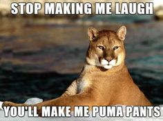 And now I keep saying 'puma pants' to myself because it's funny.