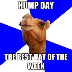 Hump day  #humpday #camel #wednesday