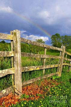 Farm Rainbow, wood fence, wildflowers...