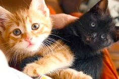 Urocze kociaki! Sweet cats! #cats #pictures #photos #koty #zdjecia