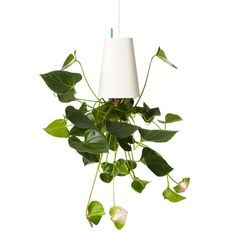 Upside-down planter