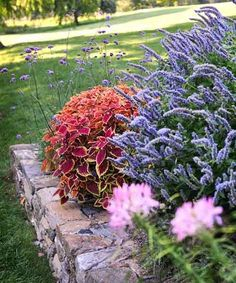 The soft lavender hues and delicately arching habits of the surrounding flowers have a mellowing effect on mounds of 'Rustic Orange' and 'Trusty Rusty' coleus.| Photo: Matthew Benson | thisoldhouse.com