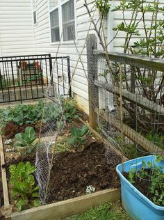 simple trellis for zucchini or cucumbers