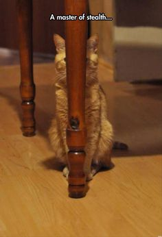 Cats are the master of stealth.