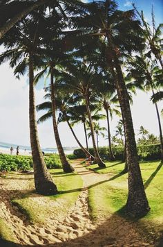 The Palm Beach, Aruba