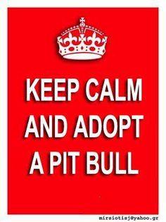 Keep Calm & Adopt A Pit Bull