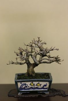 bonsai / mini