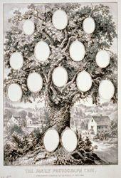 family trees, photographs, famili tree, clip art, photograph tree
