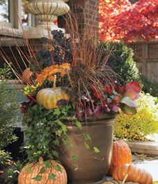 Fall container mixing plants and pumpkins (willow, kale, sedge, pepper, coral bells, bergenia, ivy)