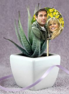 Potted succulents that feature a photo of the happy couple make a cute favor for the bridal shower. You can print the photos at Kodak Picture Kiosk. #wedding #shower #photography #ideas #diy #craft