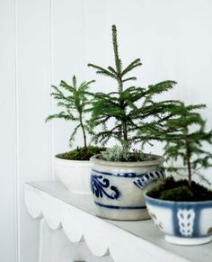small potted trees