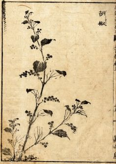Hokusai Katsushika 1760-1849 Japan Kosho Pepper