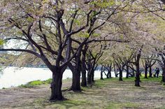 In bloom along the Charles. DiscoverTheCharles.com.
