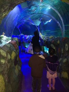Charlotte family fun ideas on pinterest 44 pins Concord mills mall aquarium