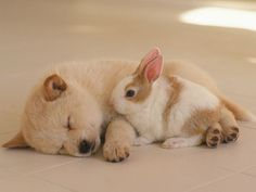 Cute Puppies sleeping | Publish with Glogster!